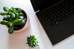 Green plants on a desk next to a laptop